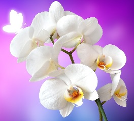With their symbolic meanings and elegant appearance, giving a gift of orchids on the occasion of the 28th wedding anniversary is a present that is sure to ...